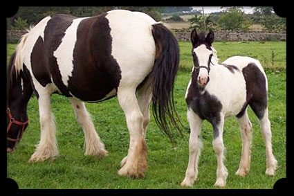 Foal by Star and Dunbrody