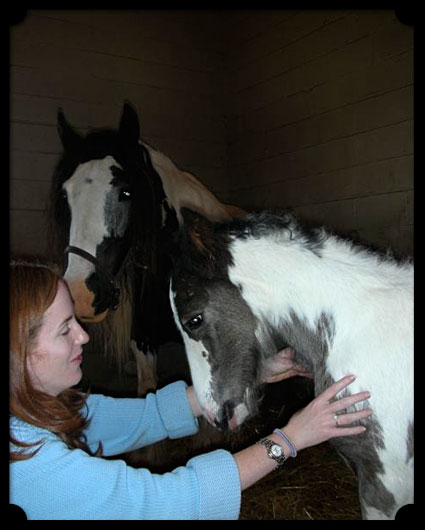 A woman treats her horses with tender loving care.